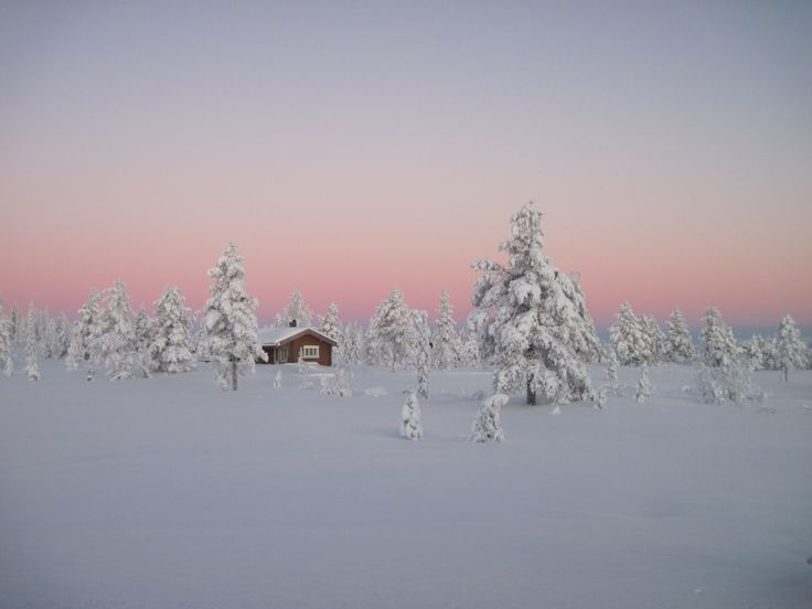 Log cabin in a Norwegian boreal forest. Contributed by Sergei Evdokimov.
