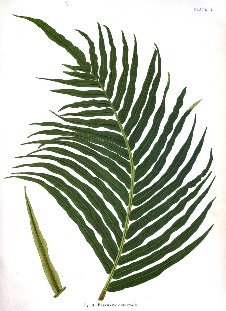 Free botanical print download. The link will take you to a beautiful print collection that you can download for free.