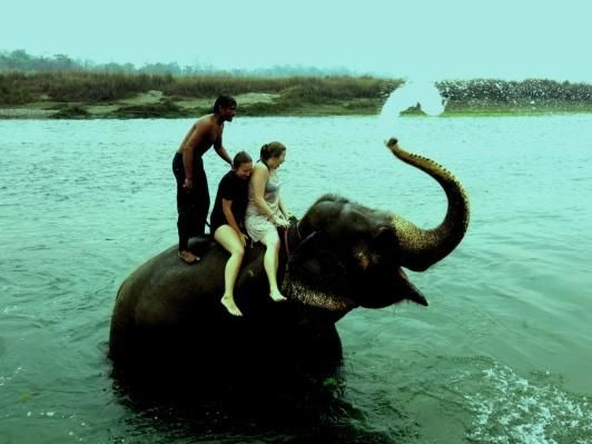 A day out with Elephants | Padhaaro