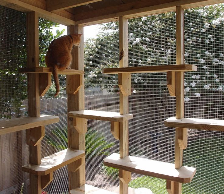http://www.thecatcarpenter.com/catios.htm  	 Cat Trees, Climbing Shelves, Catios,          Contact Me. For lots more photos of his catios check out the Catio Gallery! (Based out of Texas, though awesome ideas for the rest of us!)