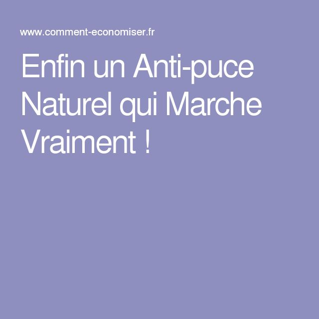 1000 ideas about anti puce on pinterest anti puce chat