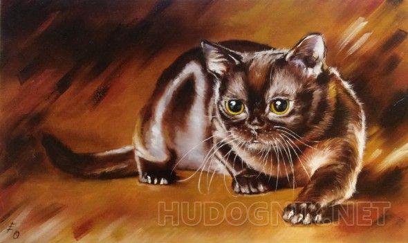 Бурман Красивый, переливающийся породистый котик. Шоколадный шоколад просто!