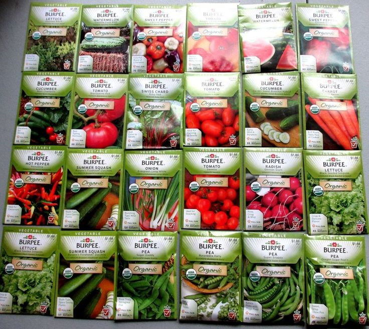 Burpee ORGANIC Seeds  (  Vegetable ) *   24 NEW Packets Packaged for 2015   $$$$