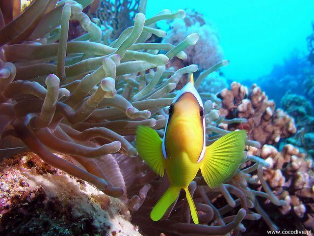 Coral reef in #australia (Rafa koralowa)