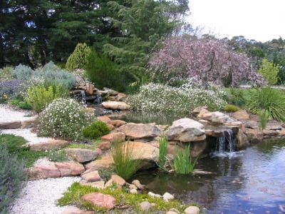 Native garden with pond and rocks