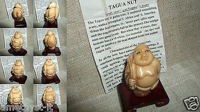 NETSUKE SHAKYAMUNI BUDDHA FELICE TAGUA NUT COROZO PORTA FORTUNA VEGETAL IVORY