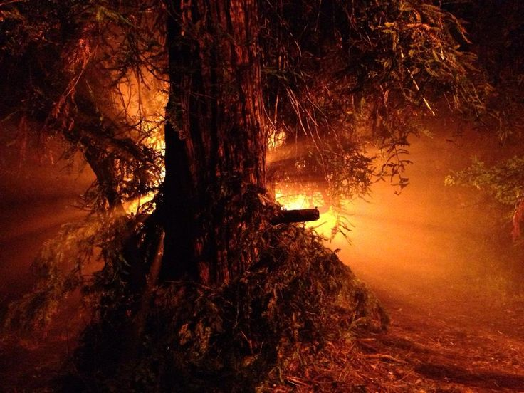 "Andrew Bikichky on Twitter: ""The impaling tree in Scene 1 with SFX Dept rig on trunk Ep803 #Castle http://t.co/MsuswaiIC7"""