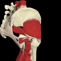 Its Not Always Bursitis: Greater Trochanter Pain Syndrome, for the hip, go to the opposite shoulder