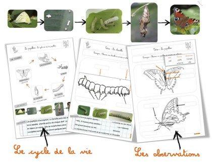 Je démarre avec ma classe un élevage de papillons: des Bombix Eri. Je remercie particulièrement Lucie qui m'a envoyé ces chenilles ( 14 au total ) . Ce n'était pas prévu, c'est un…