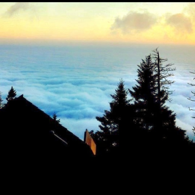Above the clouds - Mt. LeConte, Smoky Mountains, TN