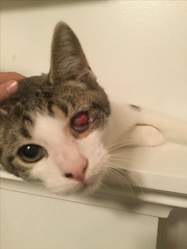 Coastal Carolina Feral Cats TNR (Trap Neuter Return) and