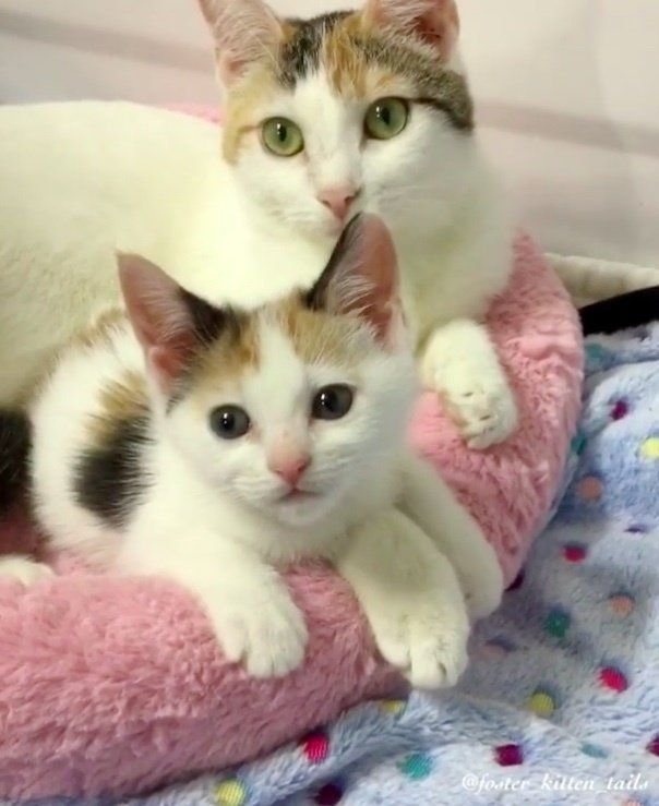 Cat Mom Rescued Along With Her Surviving Kitten She Wouldn T Let Her Go Cute Cat Gif Kittens Cat Mom