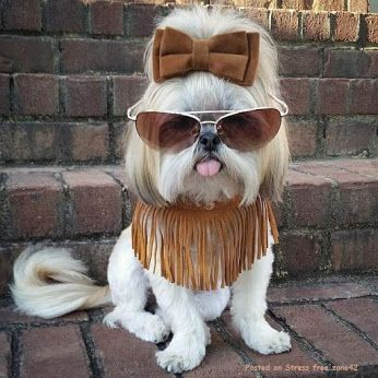Dog of the Day - Community - Google+