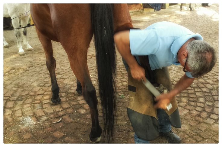 A lost art - Being a farrier, and an excellent one at that!