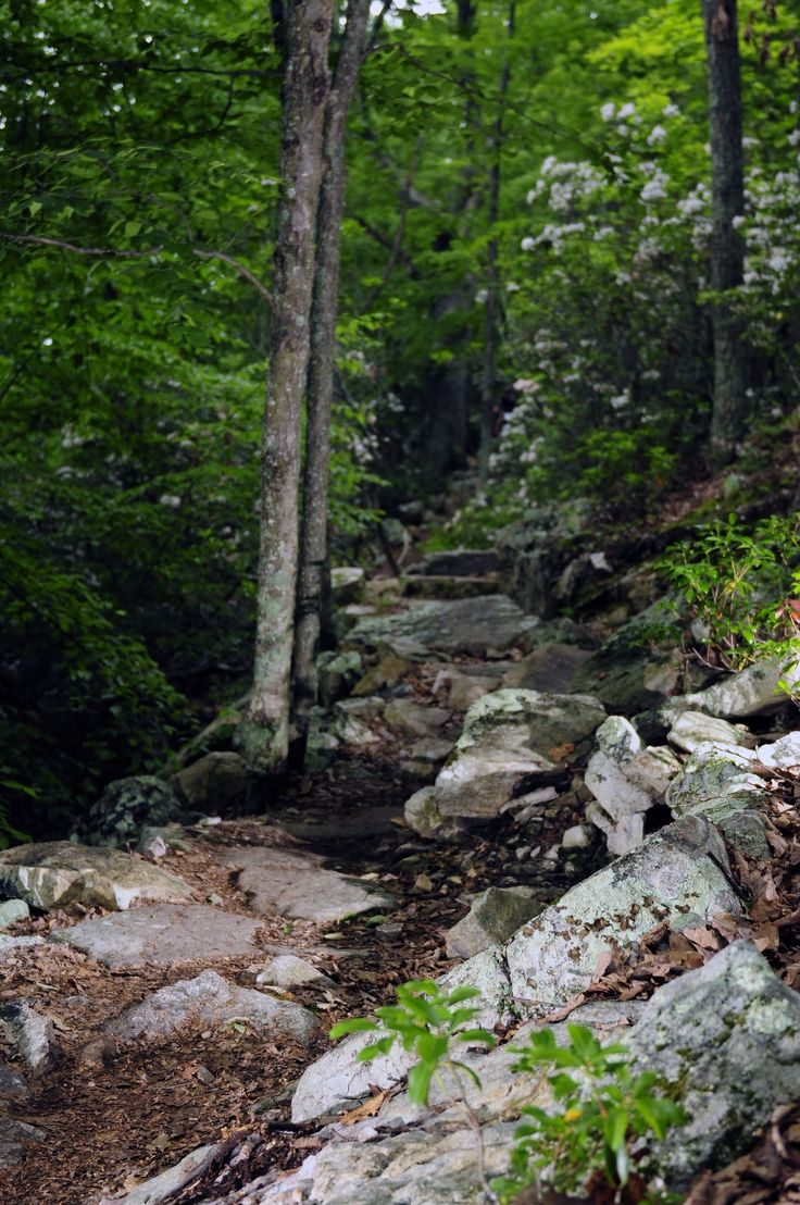 Massanutten Resort in McGaheysville, VA has some of the best trails for hiking! #hikevirginia #hikemassanutten #massresort #outdoors #hiking