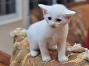 It's name is Milk, so cute.