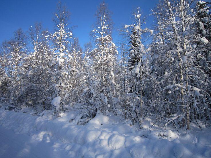 Winterwonderland Lapland