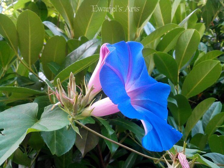 🍁🍂🌺 #EwarielPhotography #mabon #Ivy #plant #plants #lierre #sea #water #ocean #wave #bleu #ripple #naturelovers #naturephotography #wonderlust #nature #beautiful #beauty #photography #photo #horizon #holiday #oceano #Sky #ewariel #EwarielArts