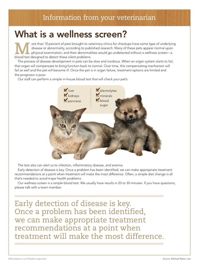 What Is A Wellness Screen For Your Pet Dvm360 Animal Hospital Cat Care Animals