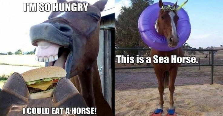 Horse Puns | 17 Funny Horse Memes That'll Make You Neigh