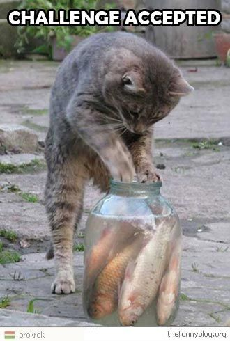 Google Image Result for http://www.writersfunzone.com/blog/wp-content/uploads/2012/05/cat-being-a-fish-author-says-challenge-accepted.jpg
