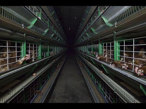 Aldi también se compromete a no vender huevos de gallinas enjauladas