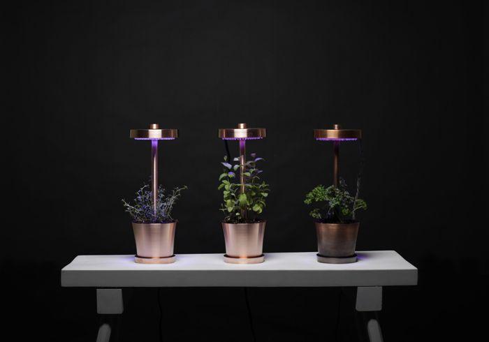 Herb lamp HOME GARDEN (material copper)