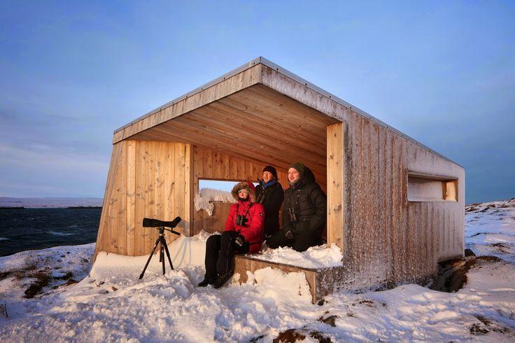 Finnmark'ta Kuş Gözlemciliği