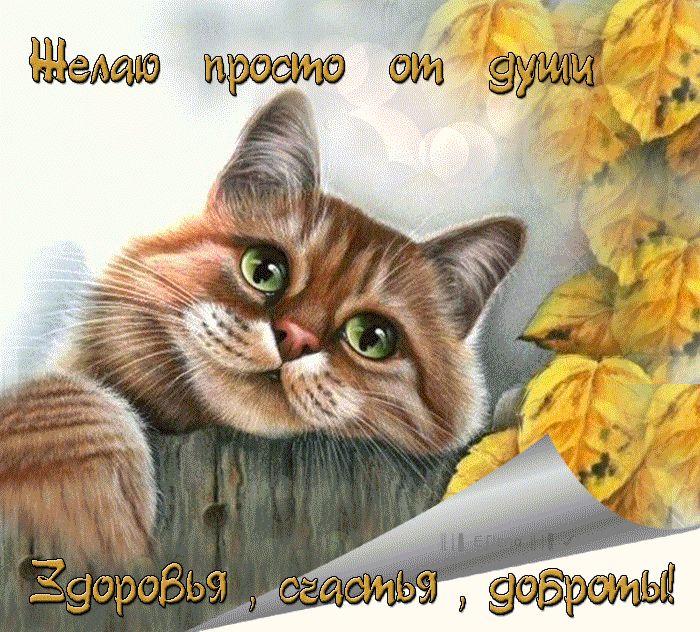 Открытки с кошкой и надписью, картинку поздравления днем