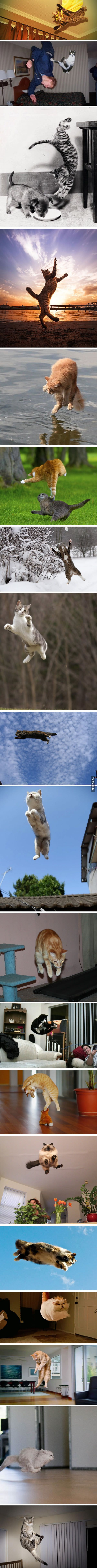 19 Hover Cats Show You They're Preparing To Dominate The World By Learning How To Fly - 9GAG