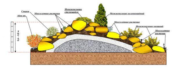 Растения в альпинарии