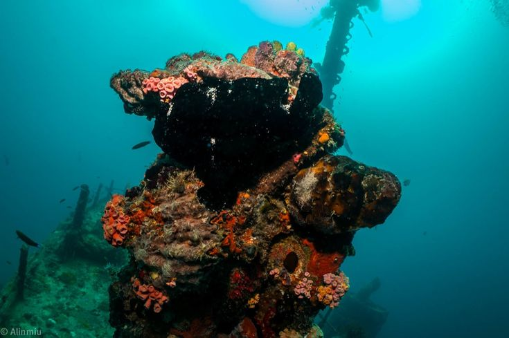 #wepaphotography #underwater #frogfish