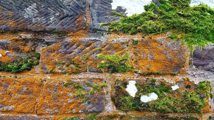 Moss and lichen on Rosedale Abbey bridge