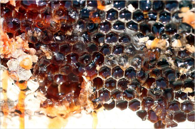 78 besten BEE\'S & HONEY Bilder auf Pinterest | Bienenhaltung, Bienen ...