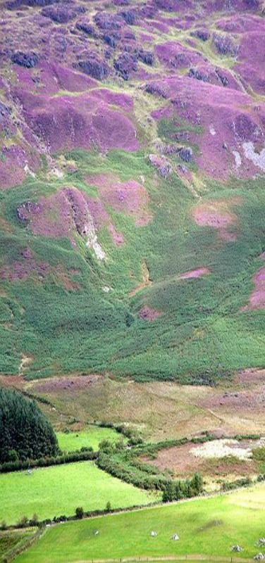 Purple Hills, Carlingford, Co Louth, Ireland ...beautiful place! ..~Janie•was•here~ trip 2