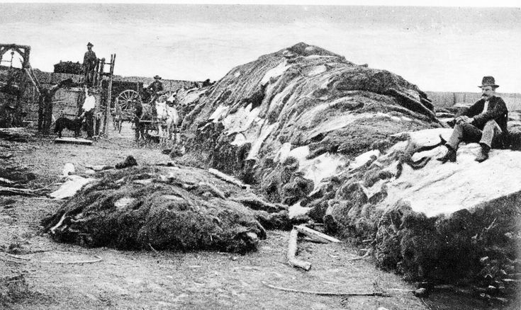 40,000 buffalo hides. Dodge City, Kansas - 1874