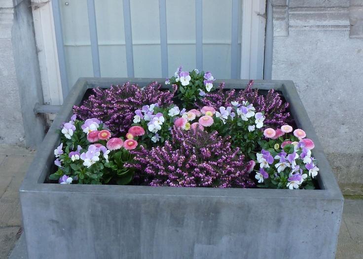 Je trouve cette composition de printemps très réussie en termes de couleurs, mais un peu plate.  A réserver pour une parterre ? Bruyères, pensées, et mini pensées.