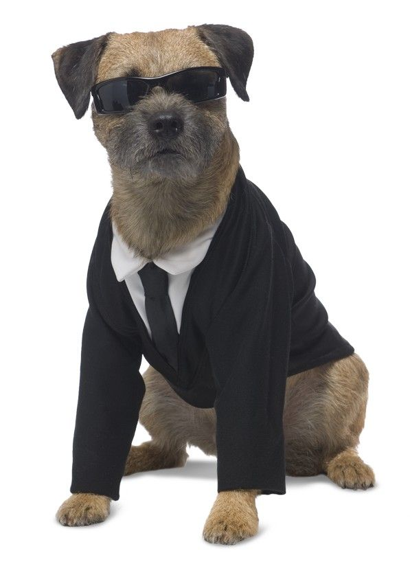 Men In Black Dog Costume My Dogs Are Doomed Pinterest Seasons A Well And Dressing