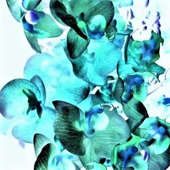 #abstract  #orchidee #turquoise #fotografie #kunstfotografie #bloemen