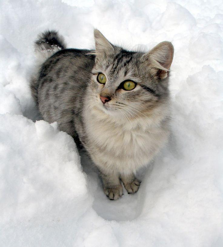 diy cat calming spray