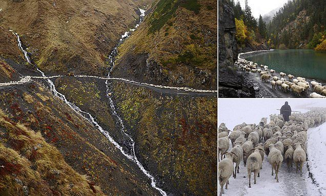 Incredible photos capture one of Europe's toughest animal migrations #DailyMail