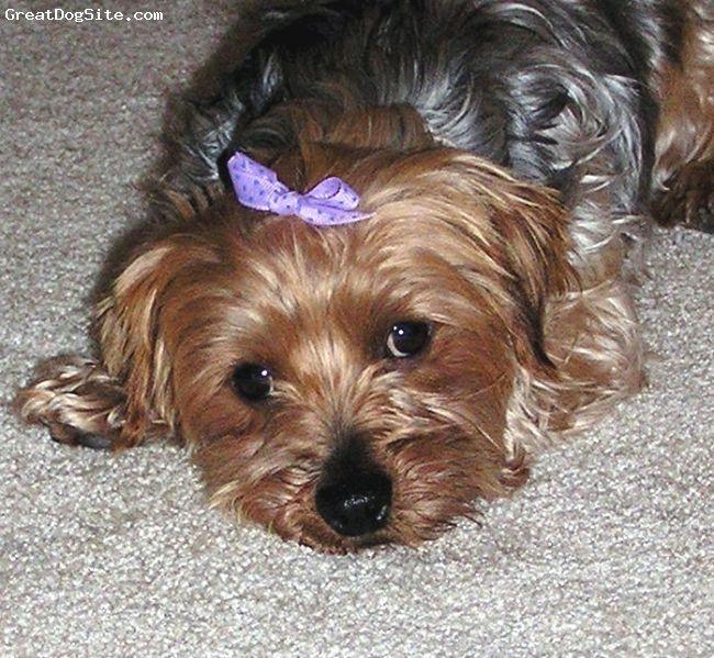 looks like my pup, great companion