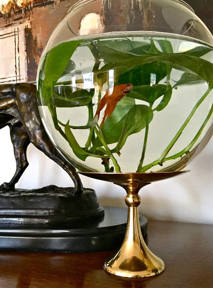 Extra-Large Clear Glass Bubble Bowl Fishbowl Goldfish Betta Fish Bowl Terrarium Vase by YatsDomino on Etsy