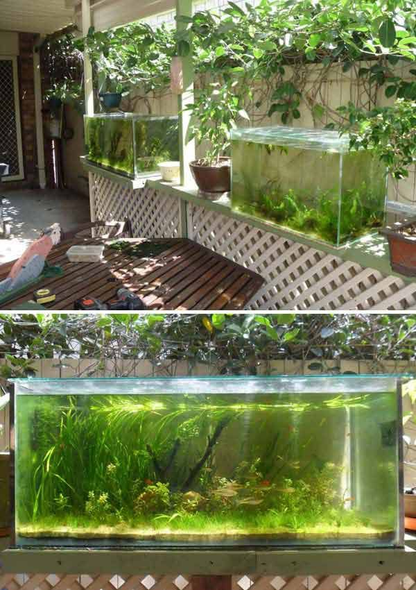 17 best ideas about outdoor fish ponds on pinterest for Outside fish tank