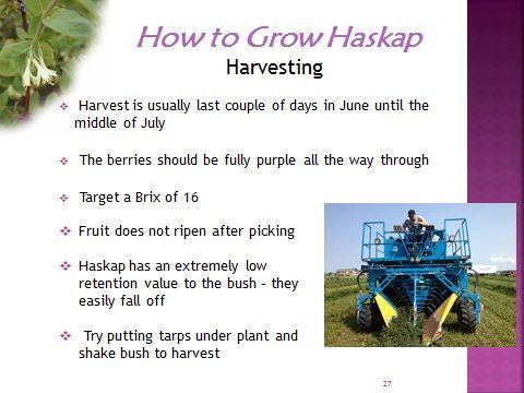 About Haskap | Haskap Canada