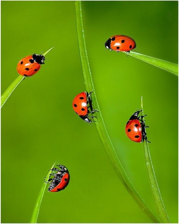 IMG_3192 LADYBIRD FLOWER by bart_man59 on Flickr - Google Search