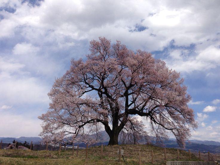 2014.桜