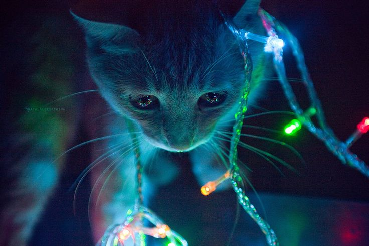 Colorful lights in a kitten's eyes