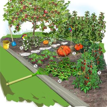 projet am nagement jardin le potager des enfants framboisier 39 h ritage 39 potiron tomate cerise. Black Bedroom Furniture Sets. Home Design Ideas