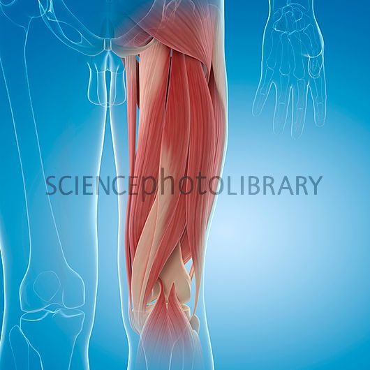 Upper Thigh Something To Think About: 17 Best Ideas About Upper Leg Muscles On Pinterest